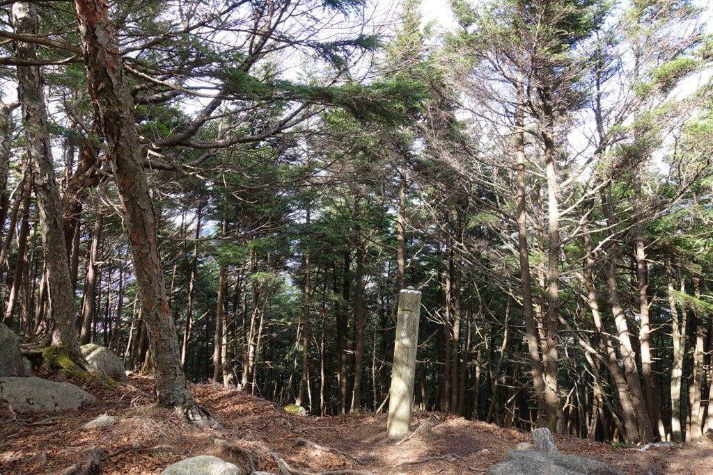 半月山山頂からの景色は木々の隙間から微かに見えるだけです
